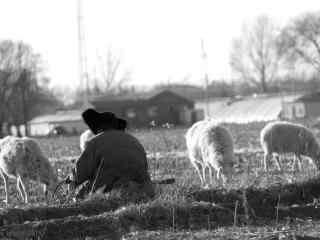 草原牧羊黑白摄影风景壁纸