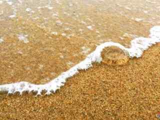 沙滩上的透明水母
