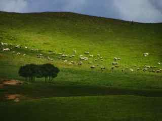 唯美草原牧羊风景桌面壁纸