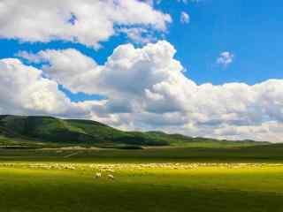 清新美丽的草原牧羊风景壁纸