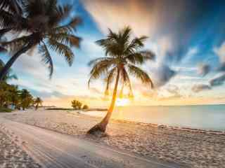 唯美夏日沙滩椰树