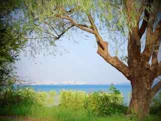小清新唯美洞庭湖湿地风景壁纸