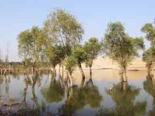 小清新洞庭湖湿地美景壁纸