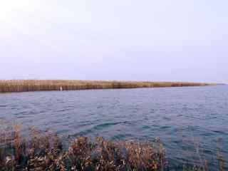 唯美的洞庭湖芦苇荡风景壁纸