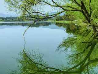 清明节-绿色护眼清明风景壁纸