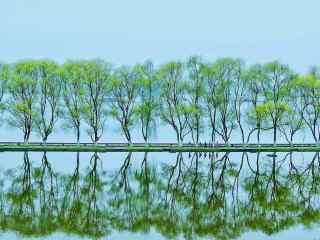 清明节-小清新春日清明风景壁纸