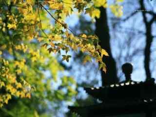 清明节-小清新清明风景壁纸