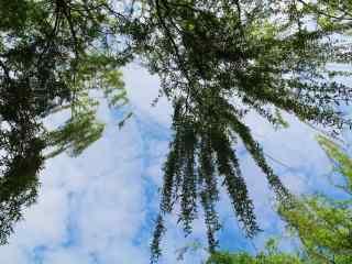 清明节习俗-天空
