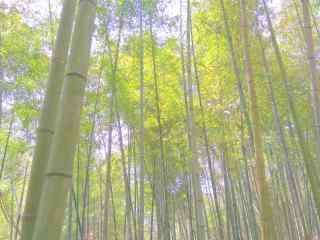 清新绿色春日竹林