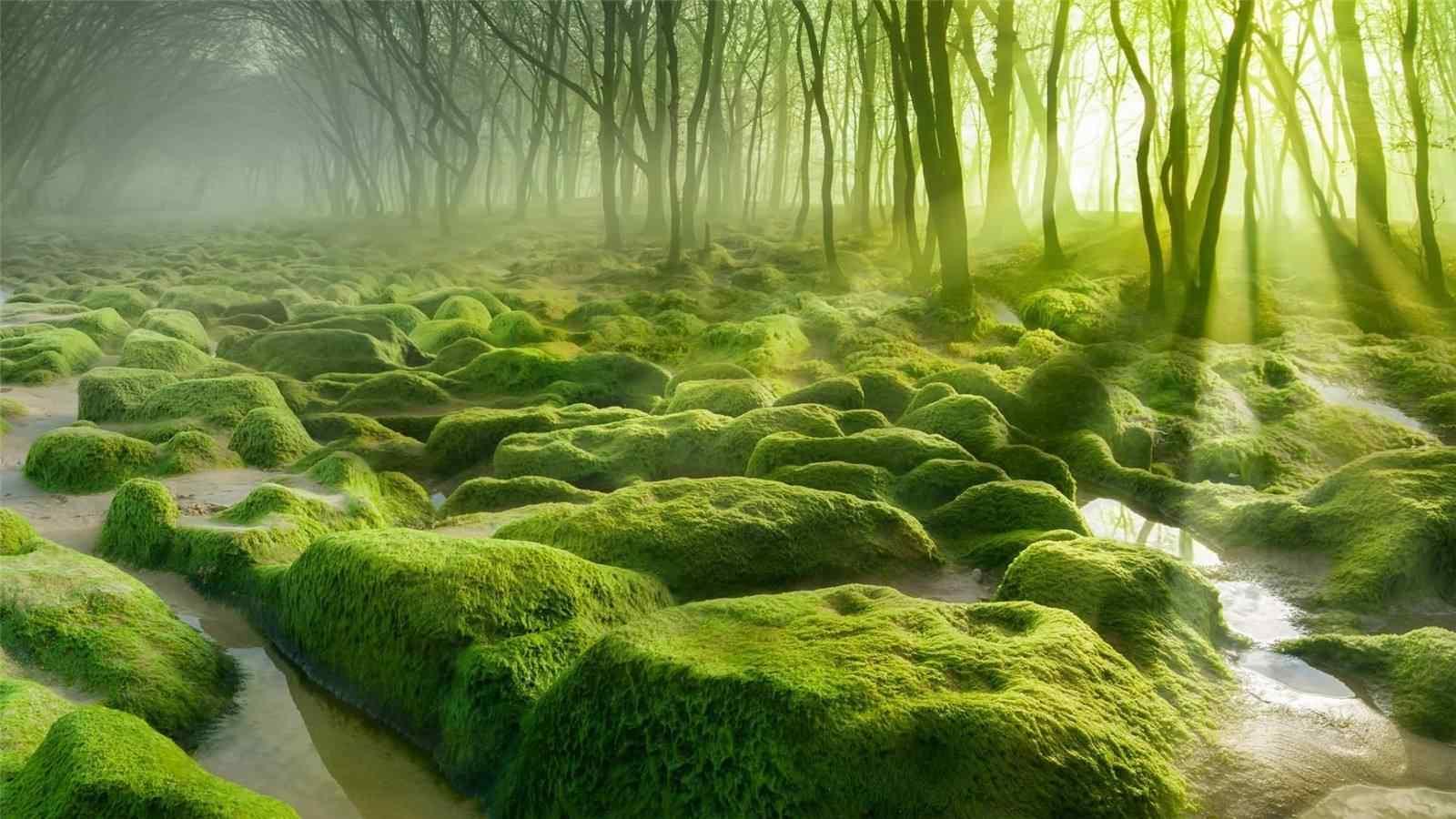 绿色树林草地风景壁纸