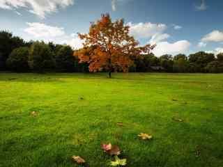 绿色大草原风景壁