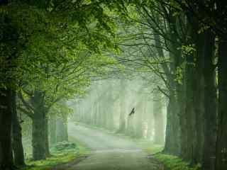 幽静的绿色树林风景高清壁纸