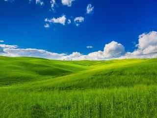 清新绿色草原风景