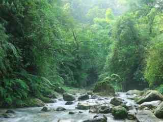 峨眉山树林间的溪