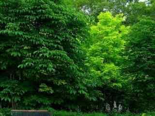 唯美清新绿色风景