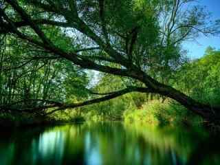 唯美绿色树林风景