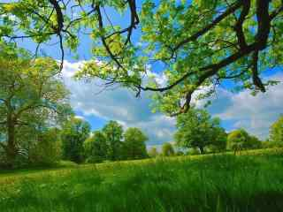 绿色唯美风景壁纸