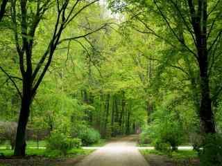 清新绿色树林风景