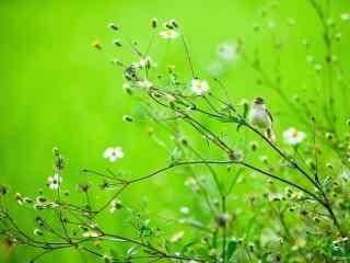 可爱的绿色风景壁