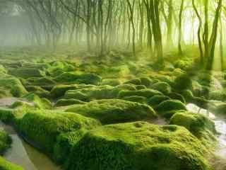 绿色树林草地风景