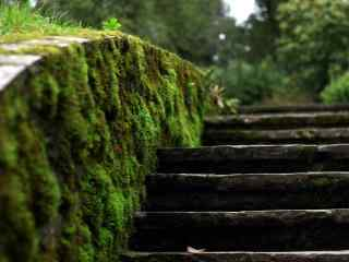 绿色小清新风景壁