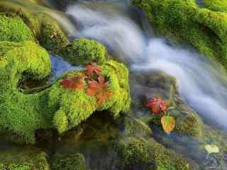 唯美绿色流水风景