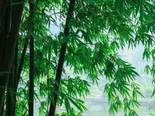绿色护眼峨眉山树
