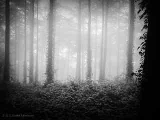 烟雾缭绕的莫干山树林桌面壁纸