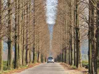 秋日里的莫干山公路桌面壁纸