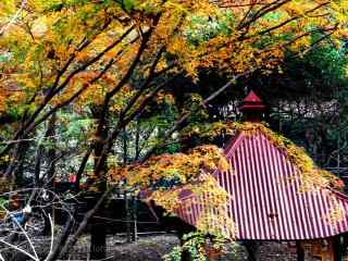 秋日莫干山树林桌面壁纸