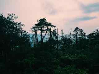 春意盎然的莫干山的树林桌面壁纸