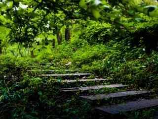 谷雨习俗-走谷雨绿色风景壁纸