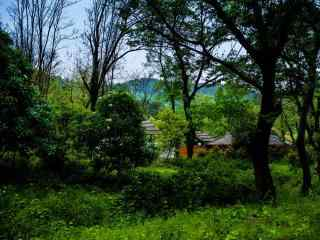 谷雨习俗-走谷雨风景图片壁纸