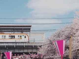 唯美樱花林中行驶电车摄影图片
