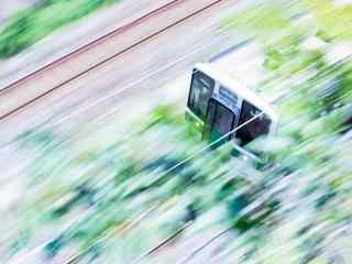 丛林中飞驰而过的电车桌面壁纸