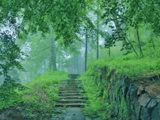 绿色护眼莫干山丛林桌面壁纸
