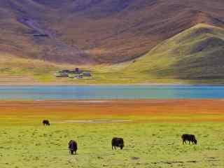 羊卓雍措河流旁的大草原桌面壁纸