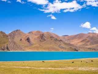 蔚蓝的圣湖羊卓雍措摄影图片