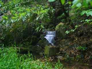 莫干山山林间的溪