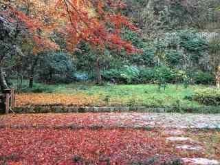 秋日落叶洒满莫干