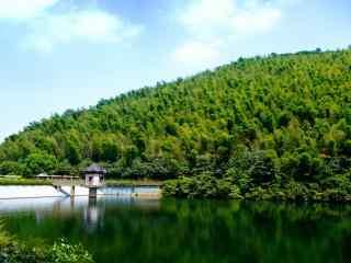 绿色护眼南山竹海优美风光景色桌面壁纸