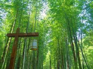 绿色护眼南山竹海竹林桌面壁纸
