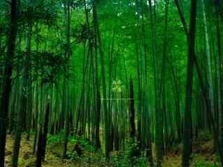 唯美绿色南山竹海竹林桌面壁纸