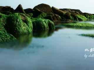 北戴河面上的绿油