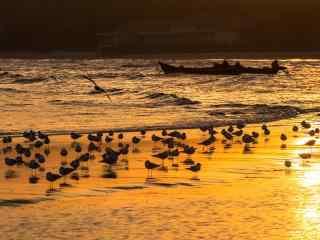 北戴河金色沙滩上