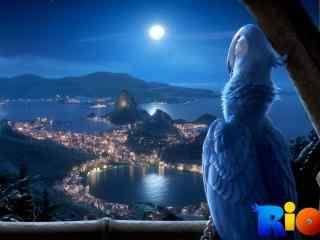 蓝色鹦鹉夜景电脑