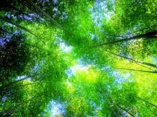 好看的竹林风景桌
