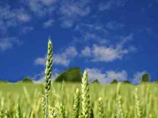 蓝色田园清凉夏日