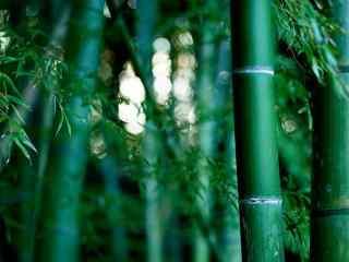 绿色竹林风景高清