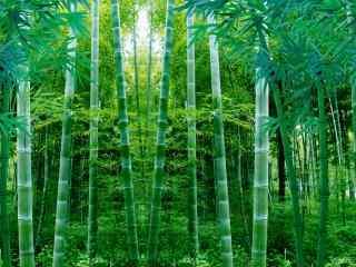 绿色清新竹林风景